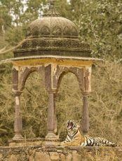 Ranthambore Tiger Safari Package -Luxury