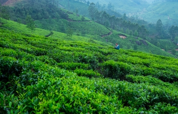 Kerala Exotica(4NKL01)