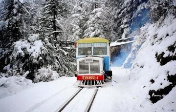 Underneath the Pine Trees(SHIMLA SPECIAL)
