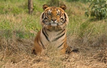 Corbett 1 Night Group Tour Package