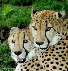 Family Adventure Safari