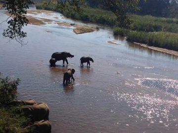 The Big 5 Safari