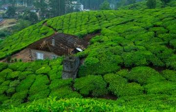 Kerala Delights(6KLN02)