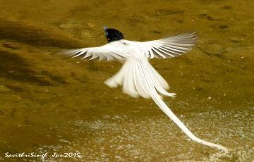 Kumaon Bird watching