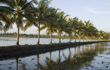 Kerala Honeymoon tour for 2 days