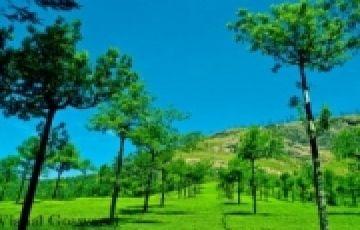 Kerala Honeymoon Tour Package 5 Nights 6 Days