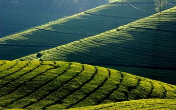 ooty mysore coonoor coorg south India tour package