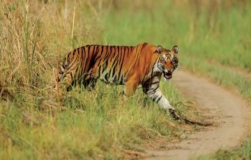 Uttarakhand  Corbett  Packages