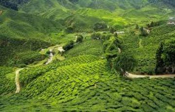 The Queen of the Hills - Darjeeling 03 Nights & 04 Days