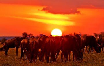 Under the Kenyan skies