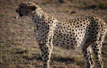 Maasai Mara Package