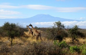 Amboseli/Lake Nakuru/Maasai Mara Trip