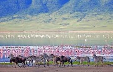 Kenya and Tanzania Safari Package