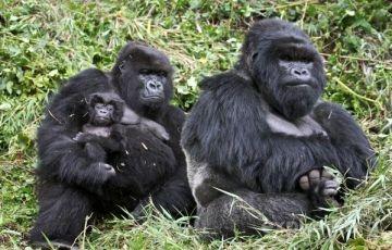 7 Days Uganda Gorilla Safari