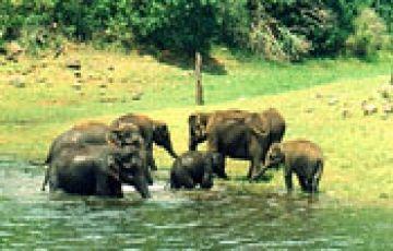 Kerala Tour Package  4N/5D