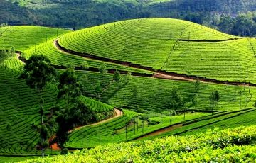 Family Tour To Munnar Package