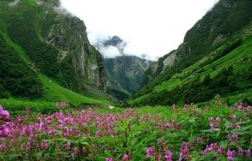 Valley of Flowers for 05 Nights/ 06 Days