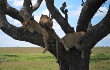 Manyara, Serengeti and Ngorongoro Package