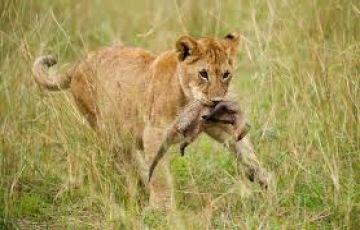 Tanzania Highlight Safari 7Days/6Nights