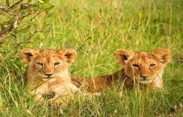 7 Days Tanzania Safari Getaway