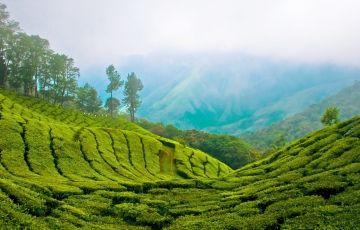 Appealing Kerala Tour Package