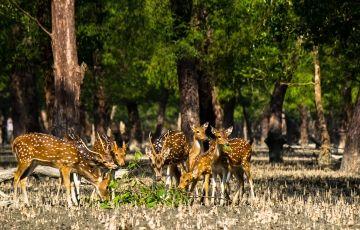 Sunderban Jungle Tour - Royal Bengal Tiger View Point