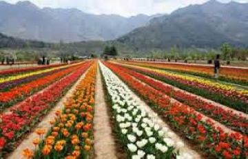 Kashmir Package for 4 Nights / 5 Days