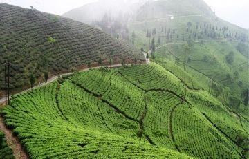 A Pass To Darjeeling Tour