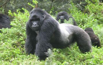 Gorilla Tracking - Bwindi Impenetrable Forest