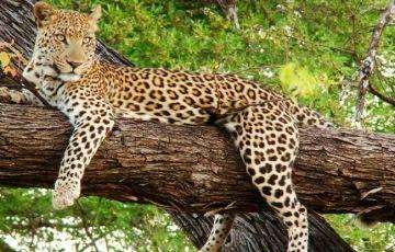 Sariska Wildlife Tour