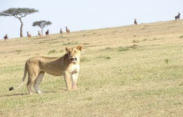 Best of KenyaTour