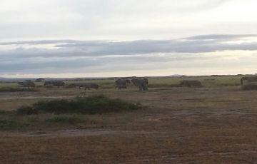 Best of Amboseli Kenya