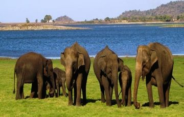 Yala to Colombo Package