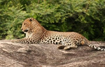 Best Of Bentota to Colombo Package