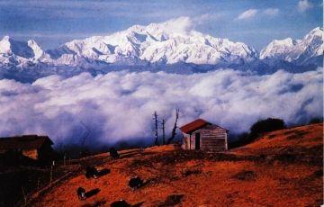 Best of Darjeeling Tour
