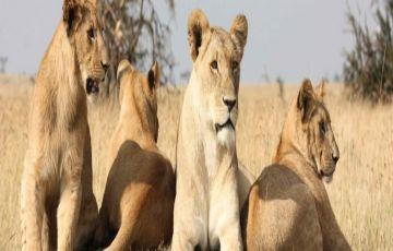 Masai Mara to Amboseli Safari Package
