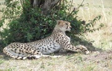 Masai Mara Game Reserve (By Road)