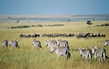 Maasai Mara - Lake Nakuru Camping Safaris