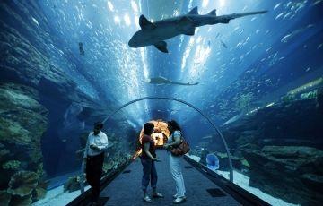 Adventurous Dubai