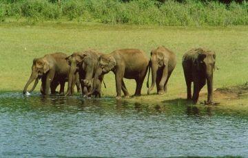 Romantic Honeymoon Kerala