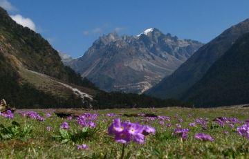 Darjeeling, Kalimpong , Gangtok & Lachung Tour