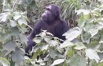 Uganda Gorilla Safari - 3 Days