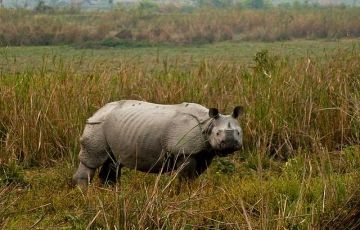 Shilong And Kaziranga National Park (Min 10 Adults)