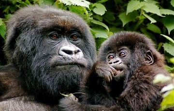 5 Day Uganda Gorillas and Wildlife Safari