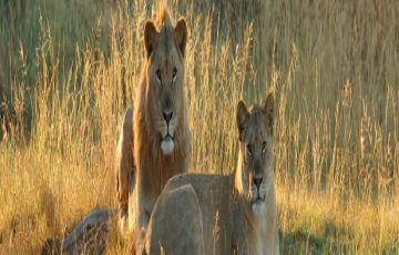 Kenya Safaris Tour Package