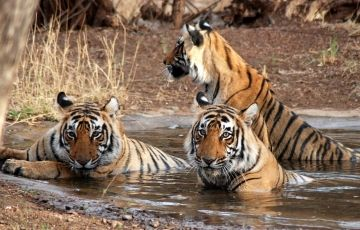 India in Style with Ranthambore