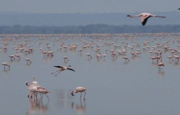 Discover The Secrets of Northern Tanzania