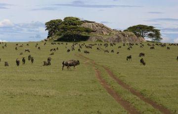 Mwanza Serengeti Safari