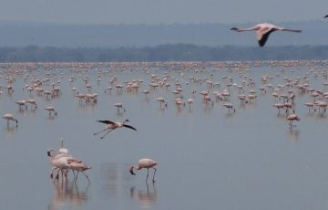Bespoke African Migration Safari - Kenya Migration Safari