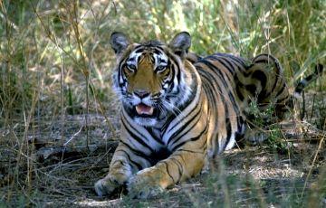 Jabalpur Kanha National Park